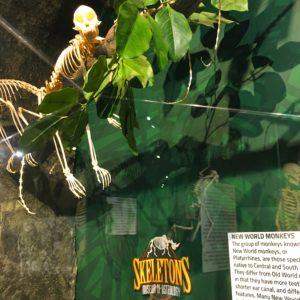 Skeleton Museum
