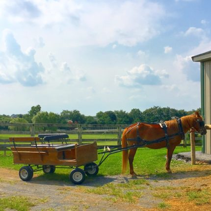 Nookside Pony Wagon
