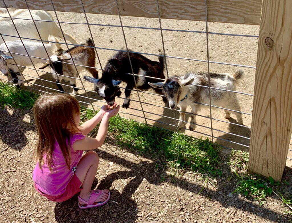 Clark Elioak Farm Petting Farm