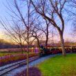 Dutch Winter Wonderland