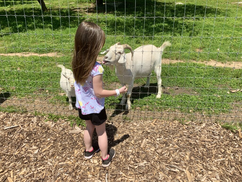 Paulus Farm Market Petting Zoo