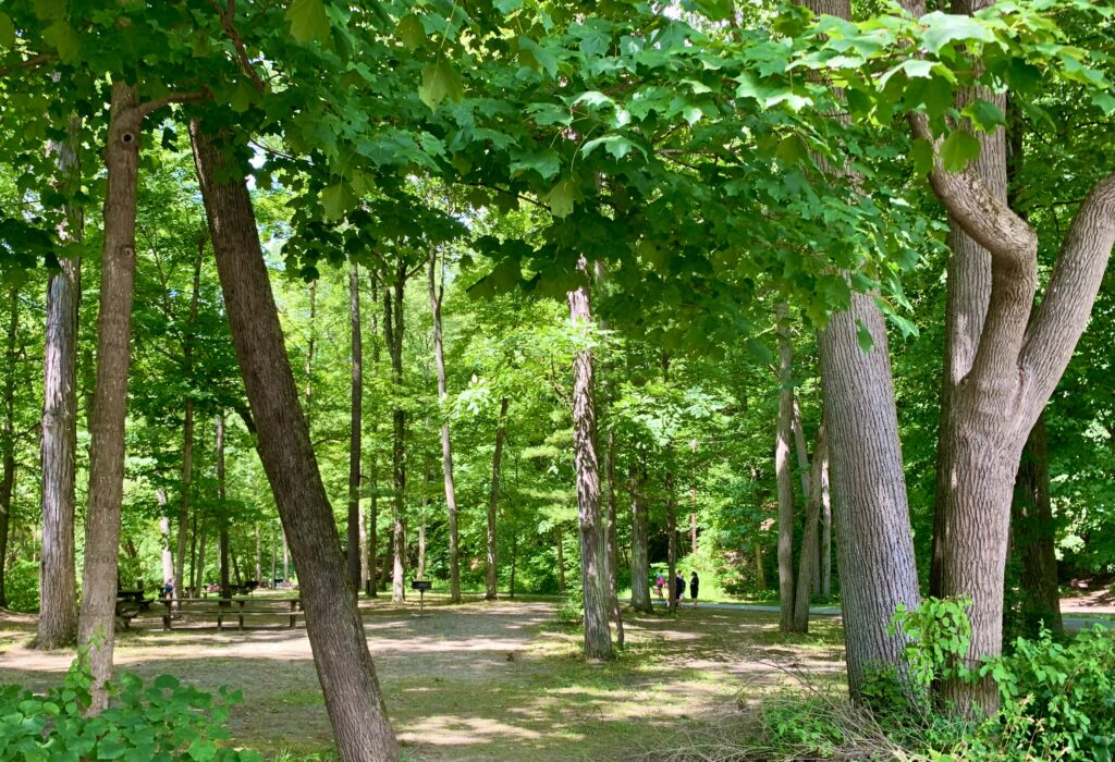 Robert Treman Picnic Grove
