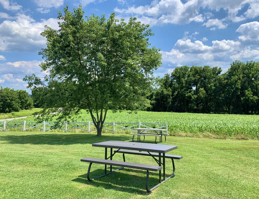 Picnic Tables and the Shoe Fence