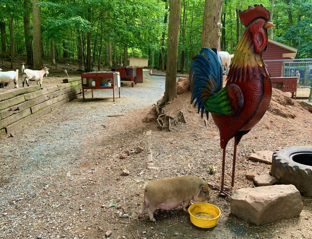 The Pretzel Hut Zoo