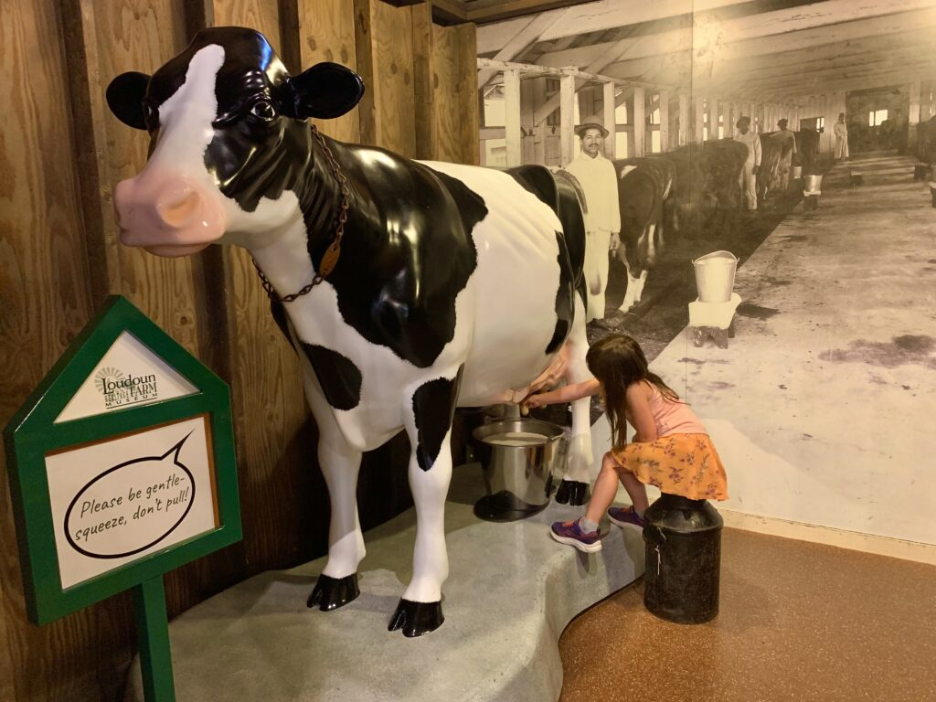Heritage Farm Museum Cow
