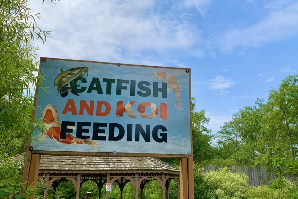 Living Treasures Catfish
