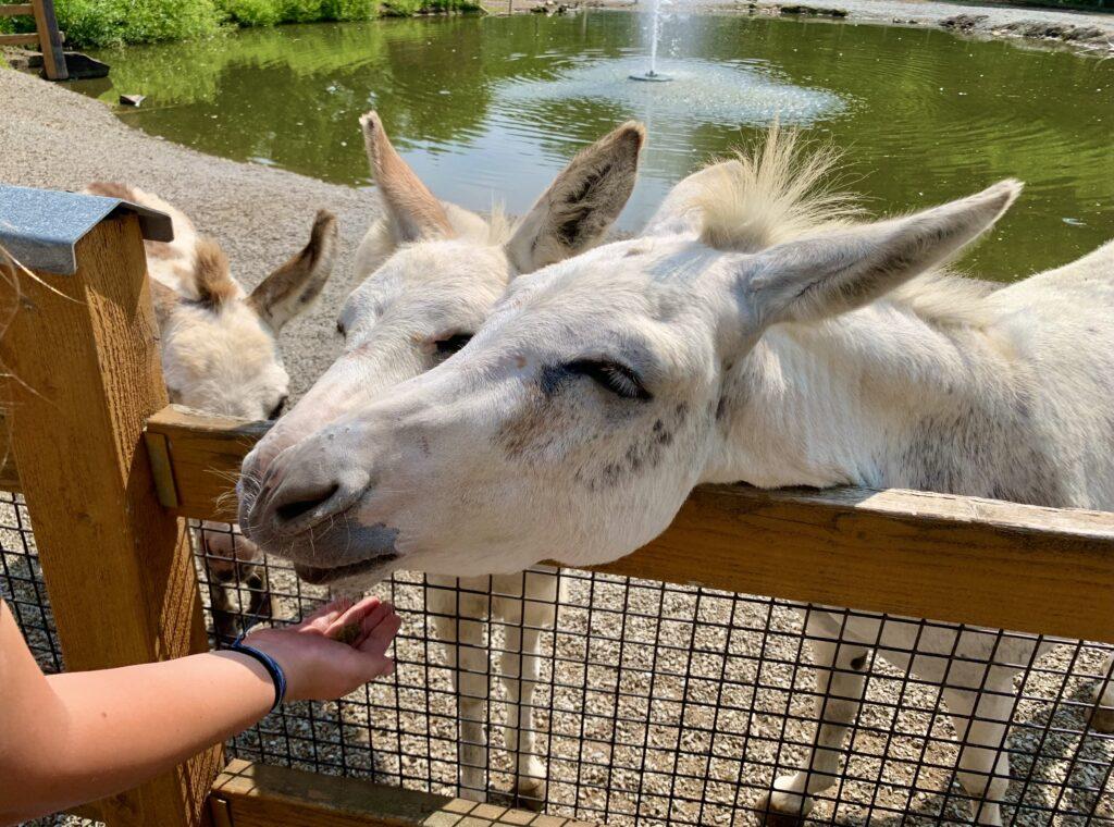 Living Treasures Donkeys